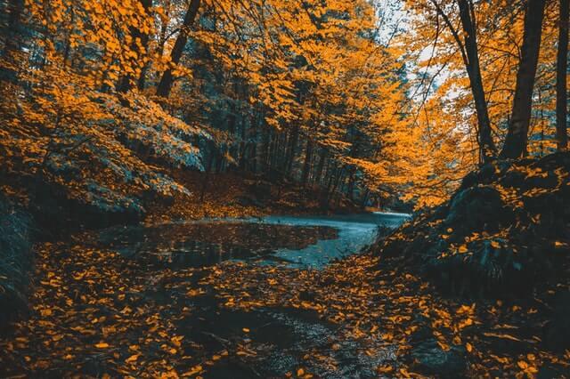 orange leaves fall park