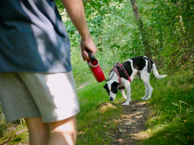 Colorado hiking trails with dogs