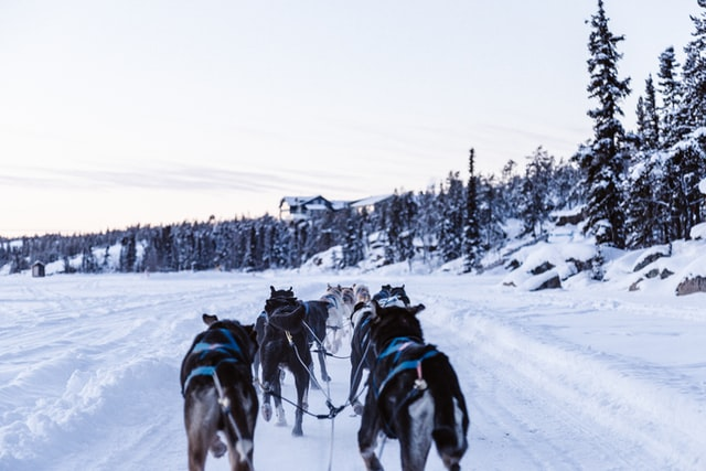 dog sledding and winter activities