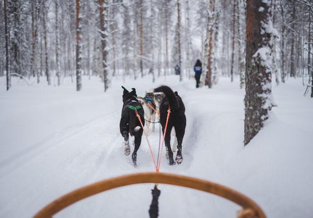 dog sledding in Breckenridge Colorado